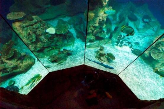 Haus Des Meeres 1