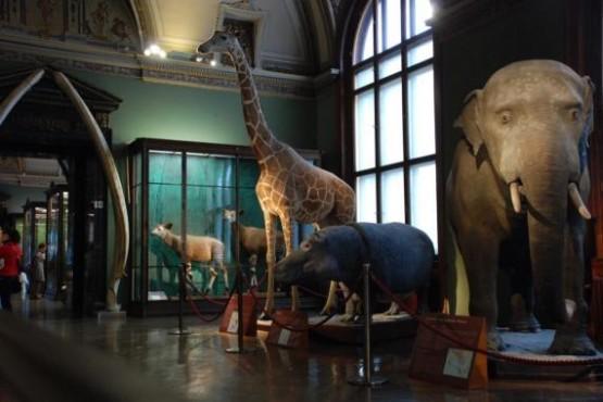 Naturhistorisches Museum 5