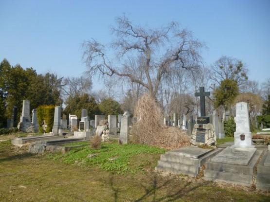 Wiener Zentralfriedhof - 14
