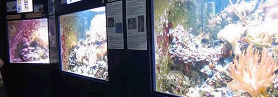 Aquarium Museum 3