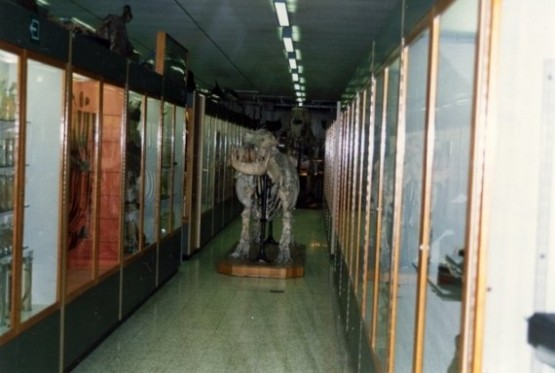 Museum de Zoologie et dAnthropologie 1