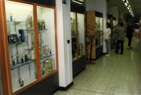 Museum de Zoologie et dAnthropologie 2