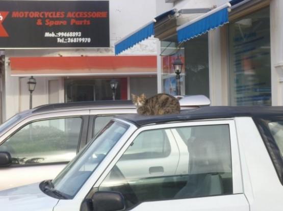 Cyprus Cats - Paphos (13)
