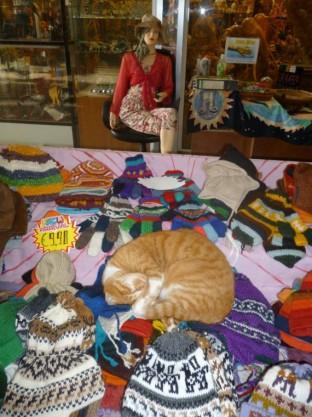 Cyprus Cats - Paphos (14)