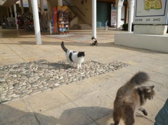 Cyprus Cats - Paphos (16)