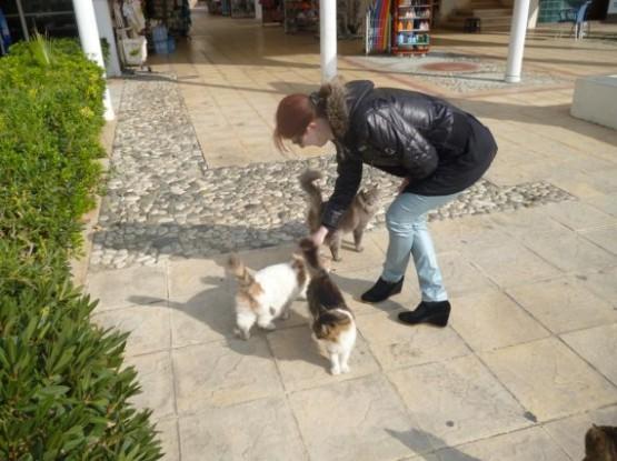 Cyprus Cats - Paphos (17)