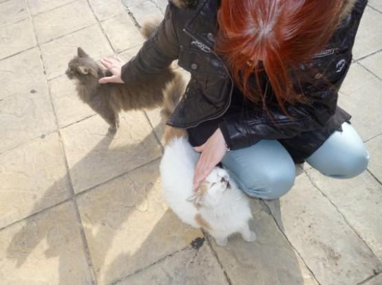 Cyprus Cats - Paphos (18)