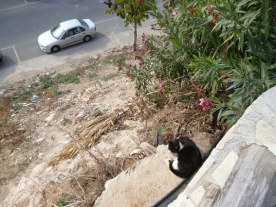 Cyprus Cats - Paphos (2)