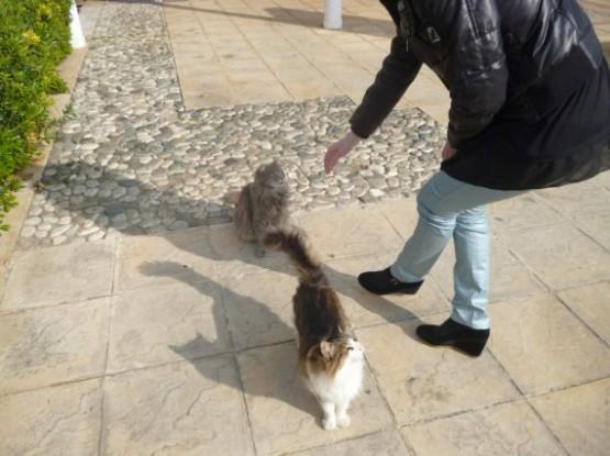 Cyprus Cats - Paphos (21)