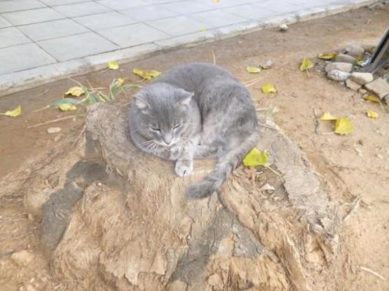 Cyprus Cats - Paphos (26)