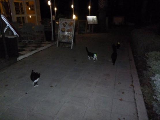 Cyprus Cats - Paphos (27)