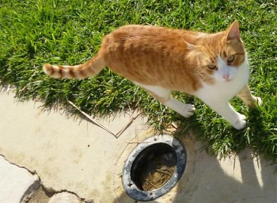 Cyprus Cats - Paphos 2015 (16)