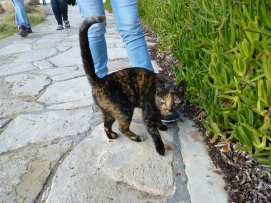 Cyprus Cats - Paphos 2015 (17)
