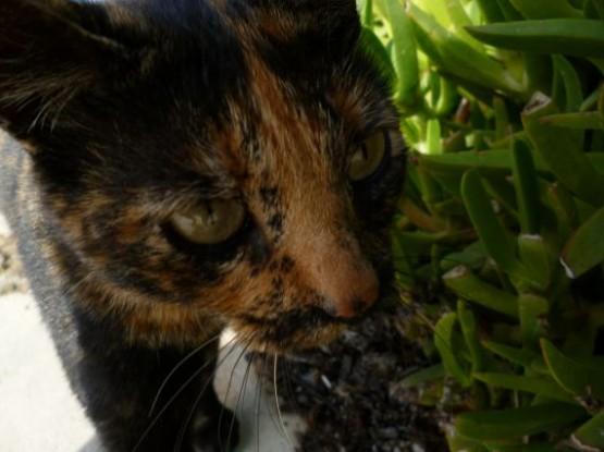 Cyprus Cats - Paphos 2015 (18)