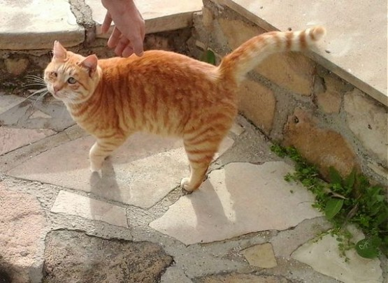 Cyprus Cats - Paphos 2015 (2)