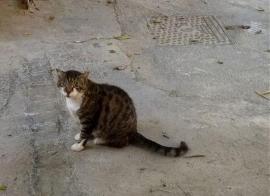 Cyprus Cats - Paphos 2015 (22)