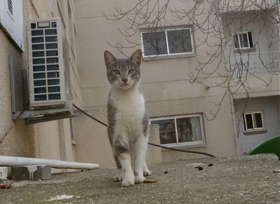 Cyprus Cats - Paphos 2015 (25)
