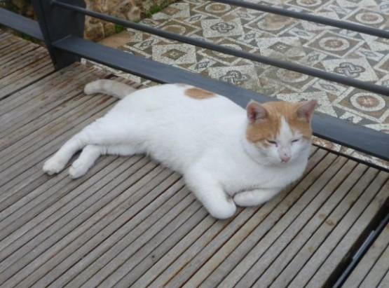 Cyprus Cats - Paphos 2015 (3)