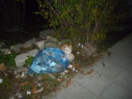 Cyprus Cats - Paphos 2015 (30)