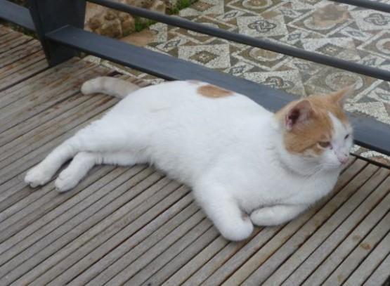 Cyprus Cats - Paphos 2015 (4)