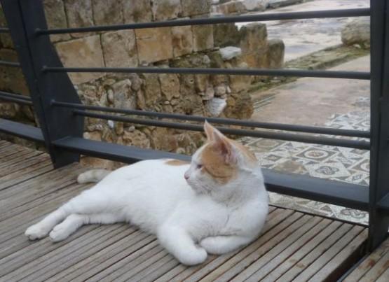 Cyprus Cats - Paphos 2015 (5)