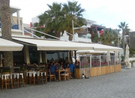 Cyprus Cats - Paphos 2015 (6)