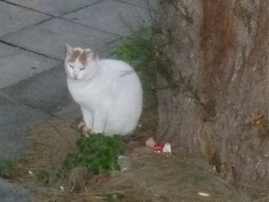 Paphos Cats Winter 2016 (1)