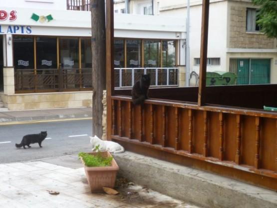 Paphos Cats Winter 2016 (7)