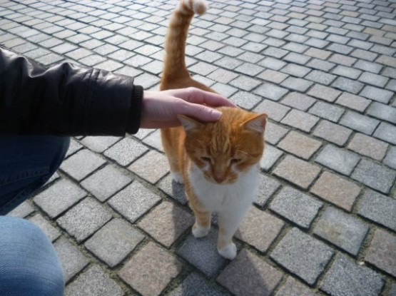 Paphos Cats Winter 2016 (9)