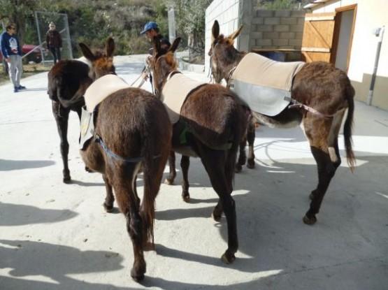 Donkey Farm (2)