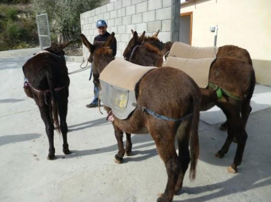 Donkey Farm (3)