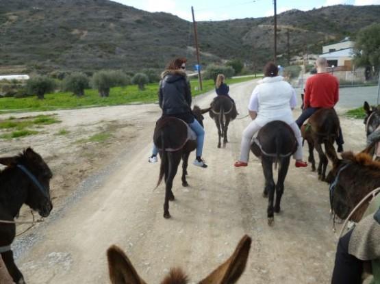 Donkey Farm (4)