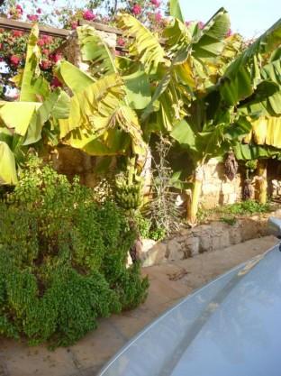 Paphos Pics 2014 (32)