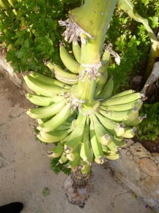 Paphos Pics 2014 (33)