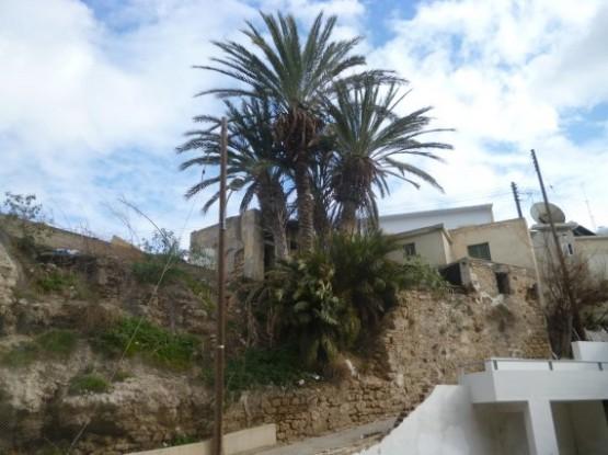 Paphos Winter 2016 (7)