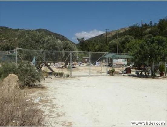 Agios Neofytos Monastery Cat Park 1