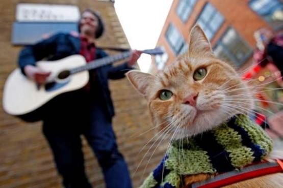 bob-cat 1