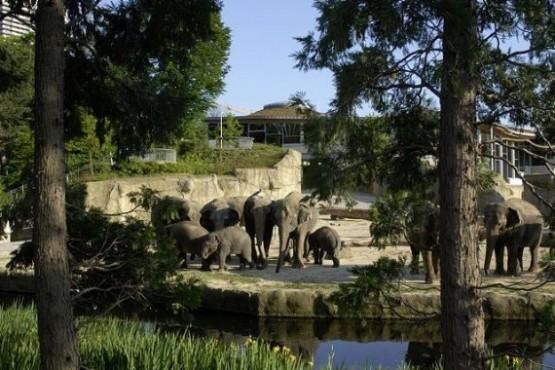 Zoologische Garten Koln 10
