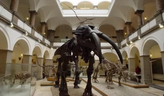 Palaontologisches Museum Munchen 1