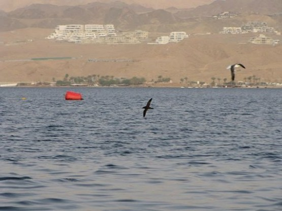 International Birding Centre Eilat - 2