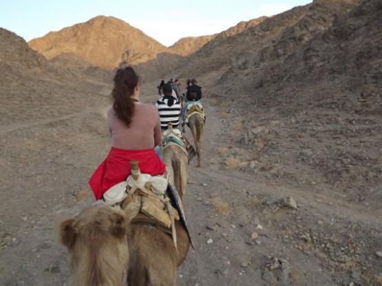 camel ranch - caravan