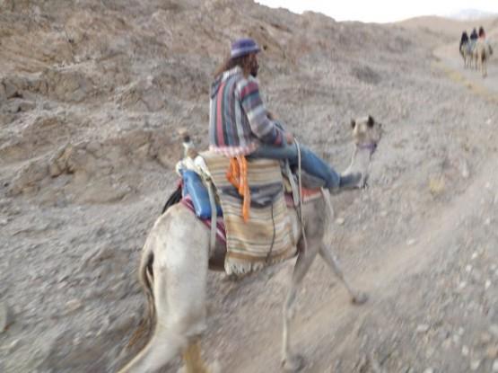 camel ranch - easy rider