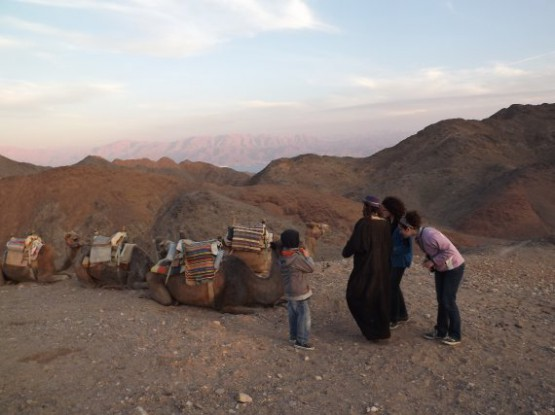 camel ranch - stop on the mountain top
