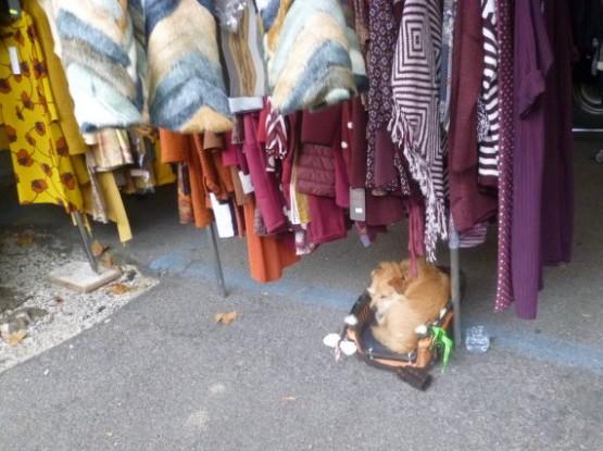 Street Market Piazza Cavour - 1